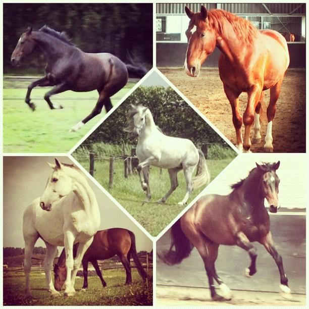 Eigenschappen van paarden | Paarden Begrijpen