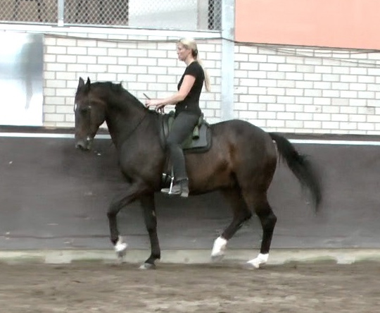 PaardenBegrijpen