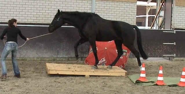 Afbeeldingsresultaat voor obstakeltraining paard