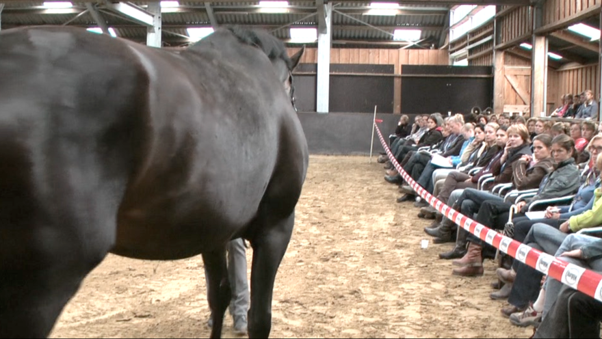 Paarden Begrijpen Premium Seminar 2011