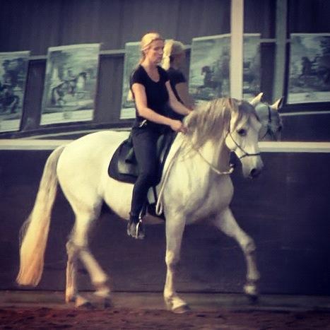 Paardenrijden